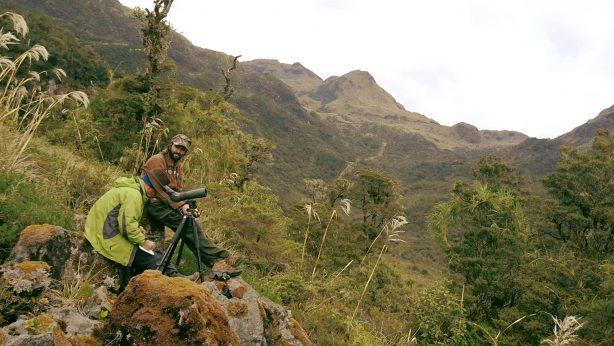 Investigación y monitoreo ecológico del cóndor andino en Ecuador