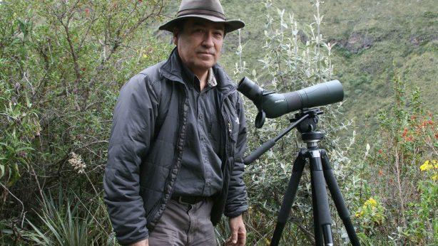 Investigación del Cóndor Andino con rastreadores satelitales y bandas alares